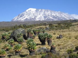 Mount Kilimanjaro climb on a mount kilimanjaro climbing tours