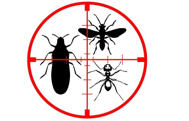 Desatascos Sevilla: control plagas mosquitos