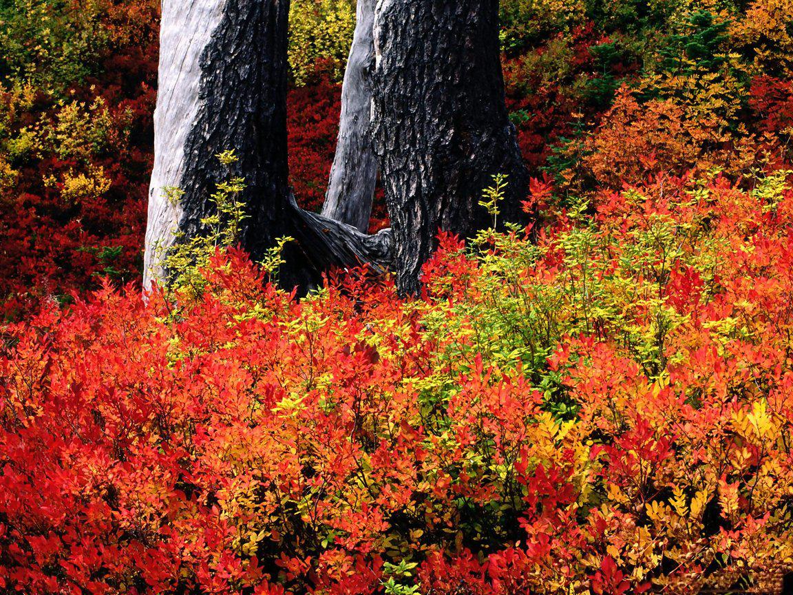 Wallpaper colorful nature - Colorful nature pics ...