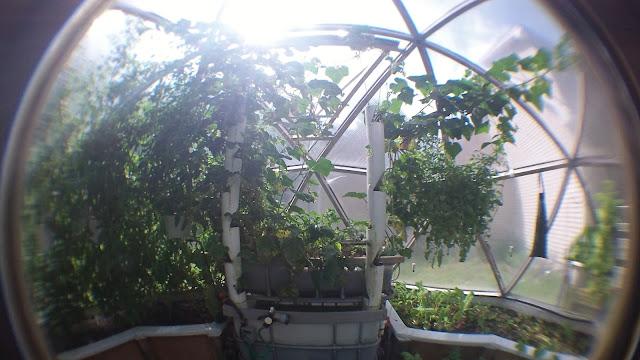 Alex S Geodesic Dome Greenhouse