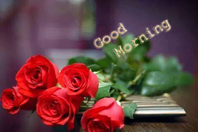 good morning friends with red roses