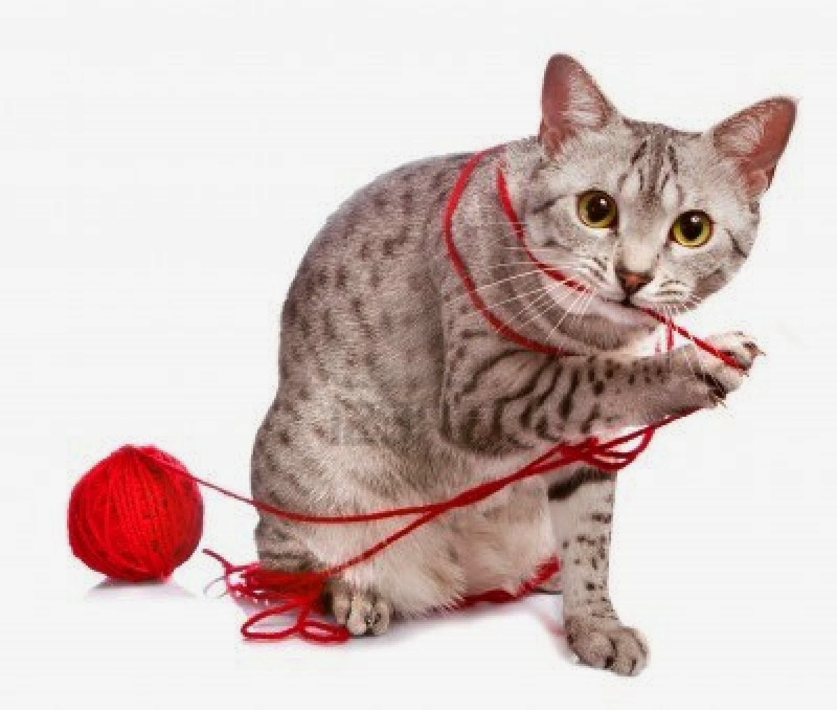 The Best Holiday Gifts for Cats - A Ball of Yarn | Animals ...