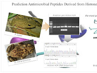 Analysis and Prediction of some Histone-derived Antimicrobial Peptides from Toads Duttaphrynus melanostictus and Phyrinoidis asper