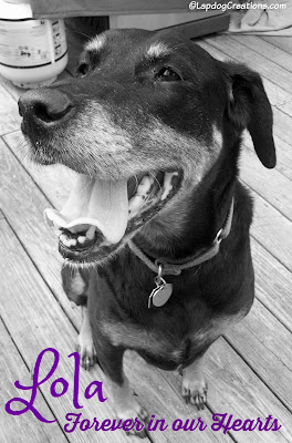smiling senior doberman mix rescue dog