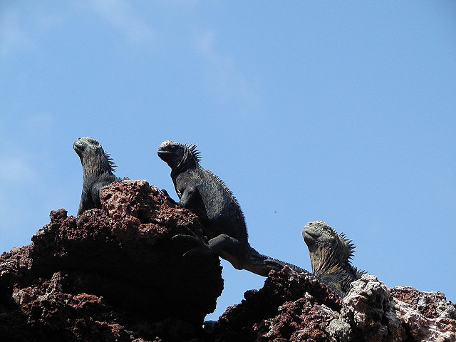 Galápagos nature at its purest