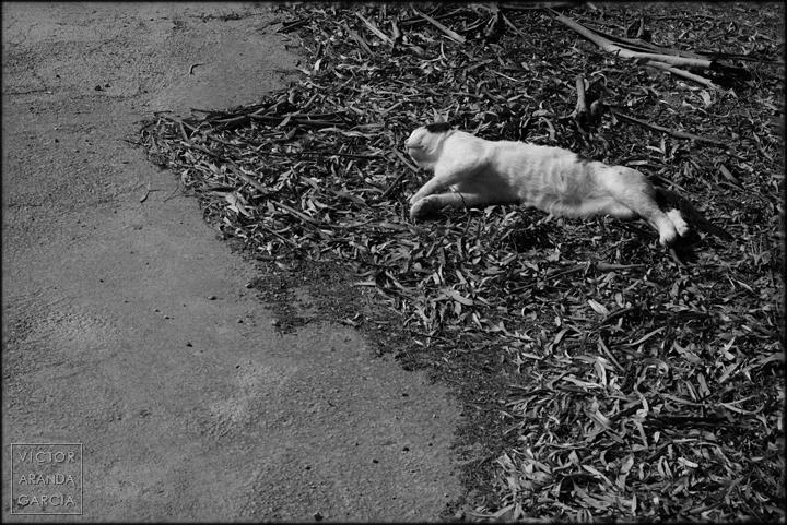 fotografia,gato,ola,vegetación,hojarasca,limites