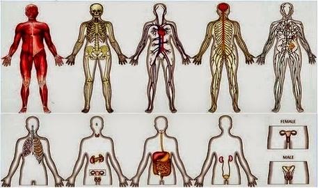Macam-Macam Sistem Dalam Tubuh Manusia