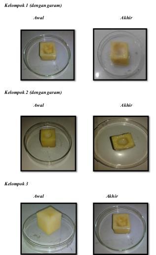 laporan praktikum difusi osmosis