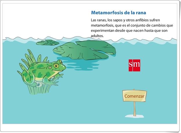 """""""Metamorfosis de la rana"""" (Presentación de Ciencias Naturales de Primaria)"""