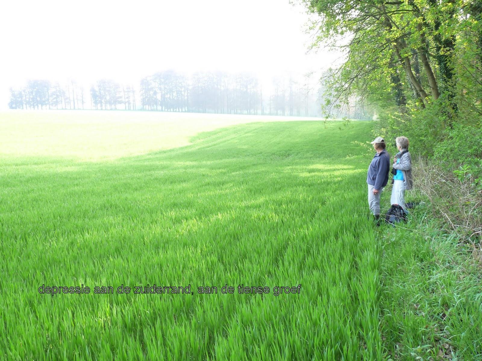 gras gebruiks kalender melkvee