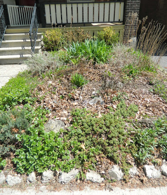 Monarch Park  garden cleanup before by Paul Jung Gardening Services Toronto