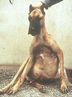 veterinaria online tuberculosis en perros