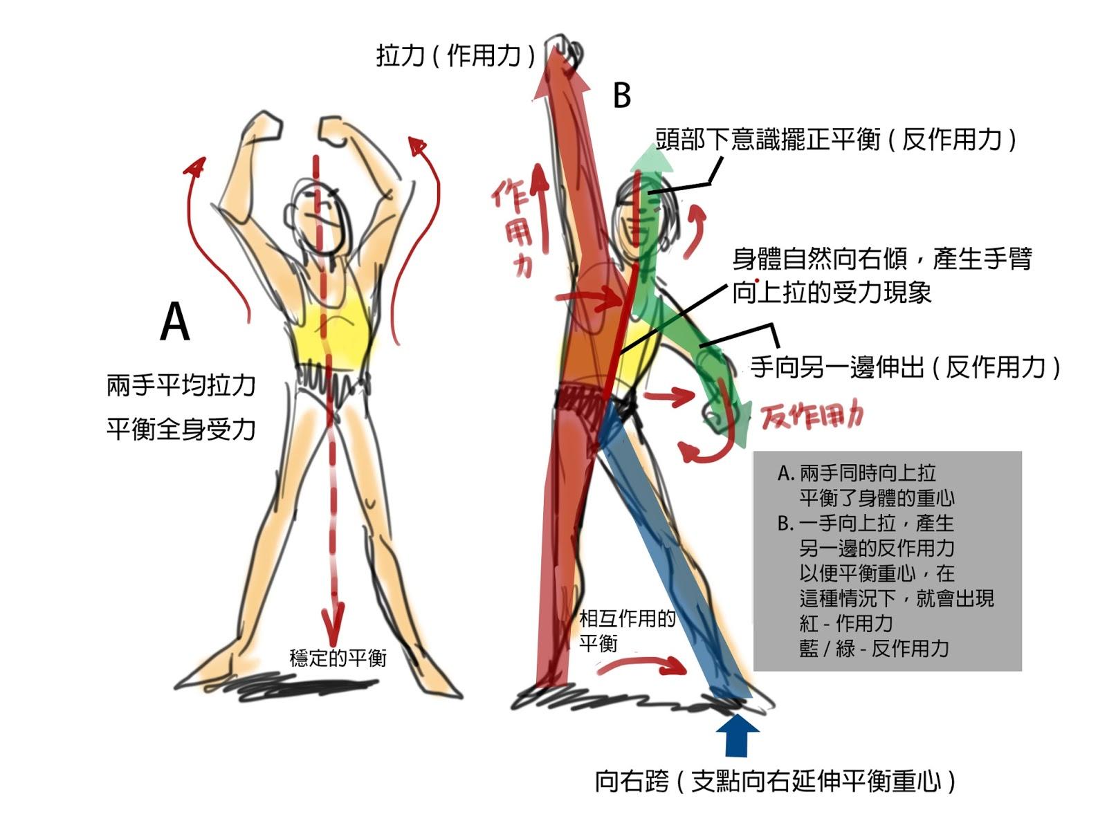 動畫聖堂: 人體力學-張力與受力