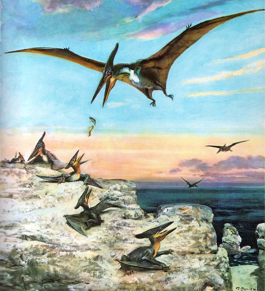 [Image: Pteranodon.jpg]