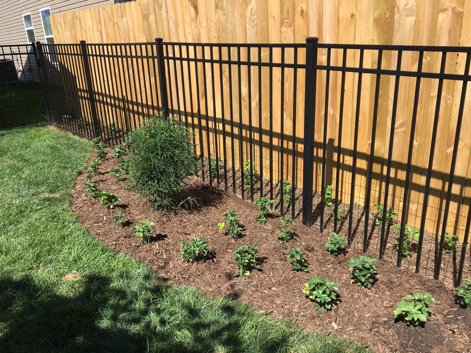 Can T Mow Between Fences Created Pachysandra Ground Cover Bed