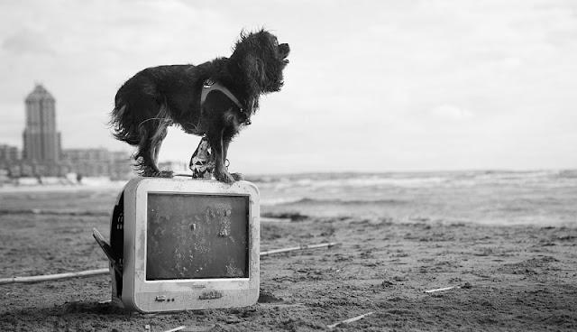 foto hitam putih anjing yang berdiri di atas televisi di tepi pantai
