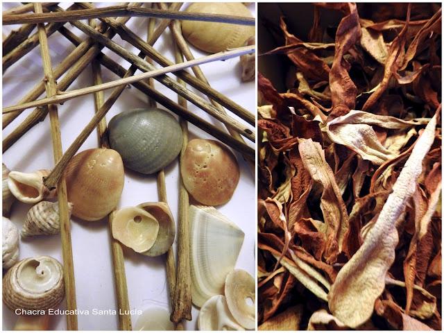 Detalle de un mandala de caparazones marinos, palitos y elementos vegetales - Chacra Educativa Santa Lucía