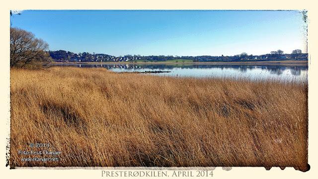 Presterødkilen naturreservat er et fredet våtmarksområde i Tønsberg med rikt fugleliv, plantesamfunn og annet dyreliv. Værgudene viste seg fra sin beste side denne april morgenen, stille og med nydelig vår sol, - kan det bli bedre ? :-)