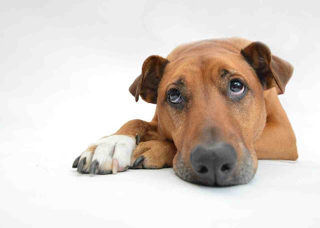Donos de animais domésticos devem preparar ambiente para a noite de Réveillon