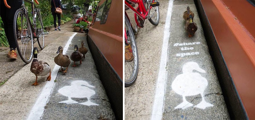 Ducks Get Their Own 'Duck Lanes' Near The Canal Walkways In London