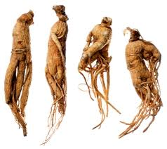 Ginseng is a woody plant that has a very long period of development and life, which is why it is called the Chinese root of life. The ginseng root looks is very similar to the human body.