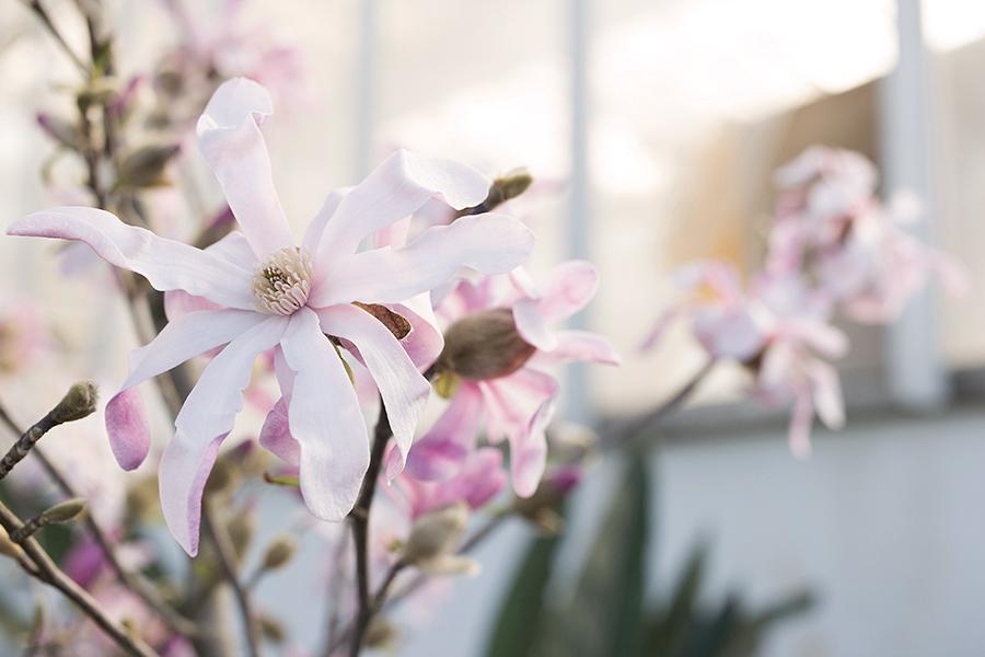 PRIMAVERA - quando arriva il momento di fiorire
