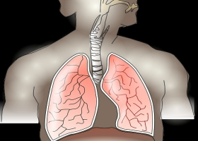 Picture on exchange of oxygen in the lungs.