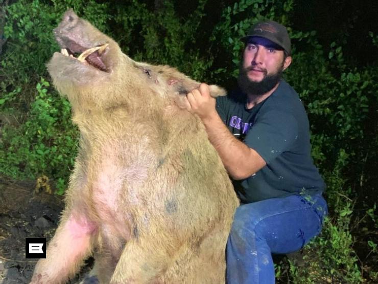 Capturan un puerco salvaje de 411 libras en Texas