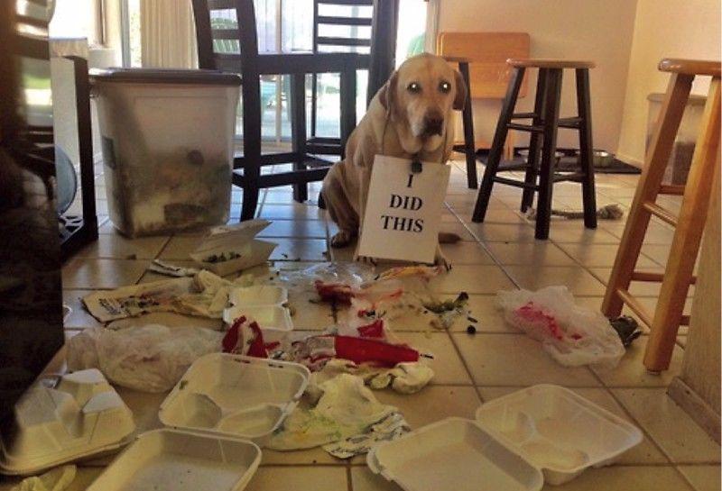 Το πιο ένοχο σκυλάκι στον κόσμο!!! (βίντεο)