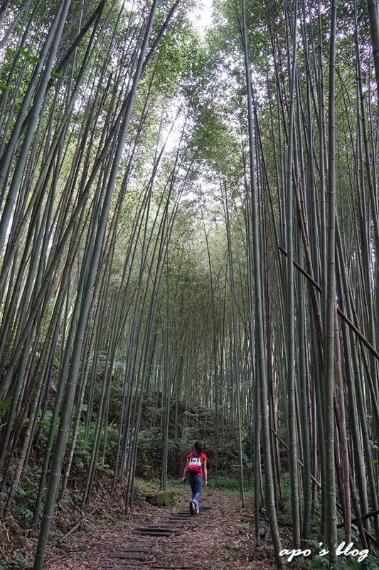 白蘭溪古道出口竹林景觀