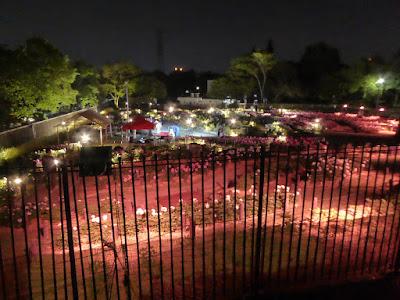 久宝寺緑地シャクヤク園のライトアップ