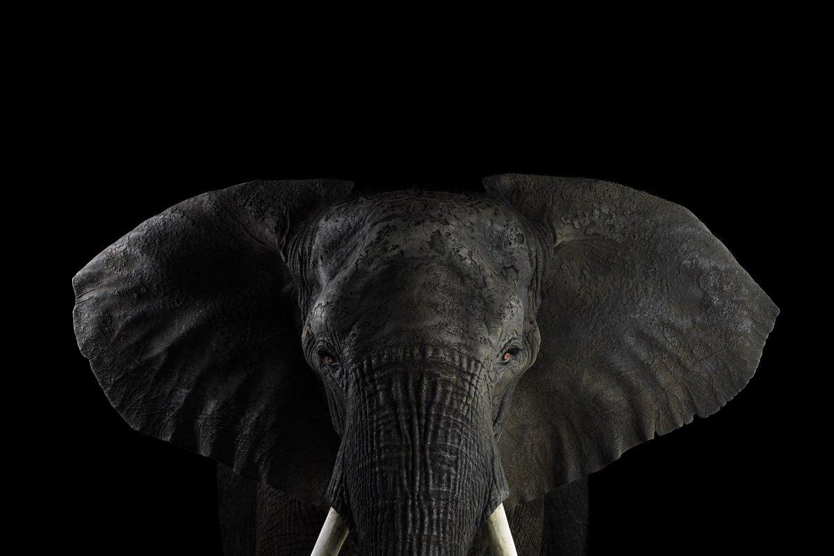 Chubby elephant tube