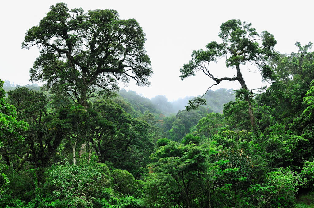 Dr Lakhimi Gogoi Layers And Types Of Rainforest