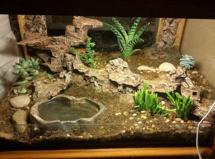 leopard gecko habitat leopard gecko setup. Black Bedroom Furniture Sets. Home Design Ideas