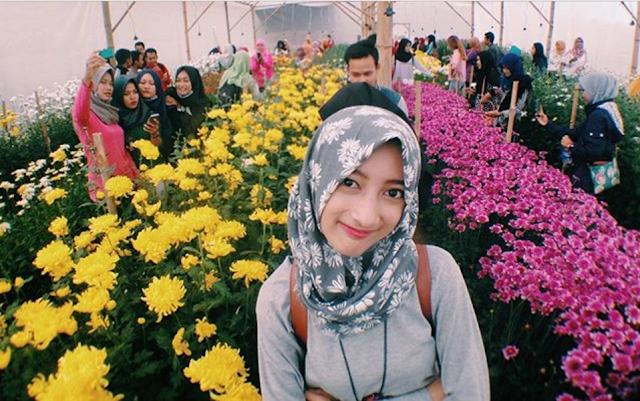 Kebun Bunga Krisan Wonobodro Blado Batang