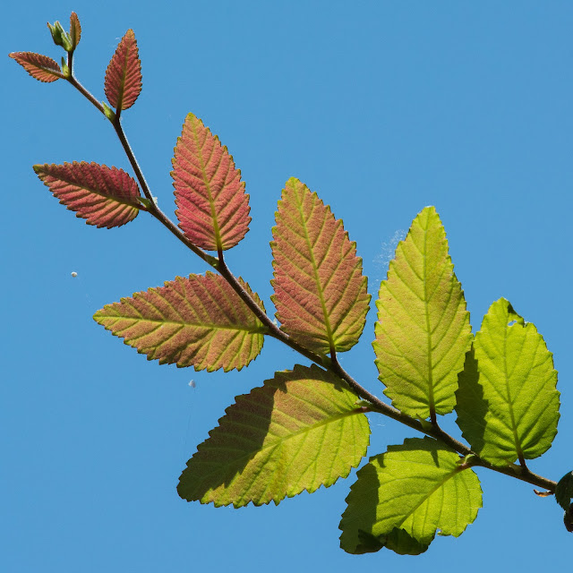 New Leaves, Hagerman NWR