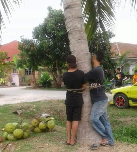 Photos: Two young men caught stealing coconuts and tied to a tree