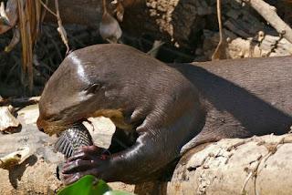 Binatang Atau Hewan Langka Di Dunia Yang Terancam Punah