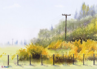 エニシダ Broom 水彩画 Watercolor