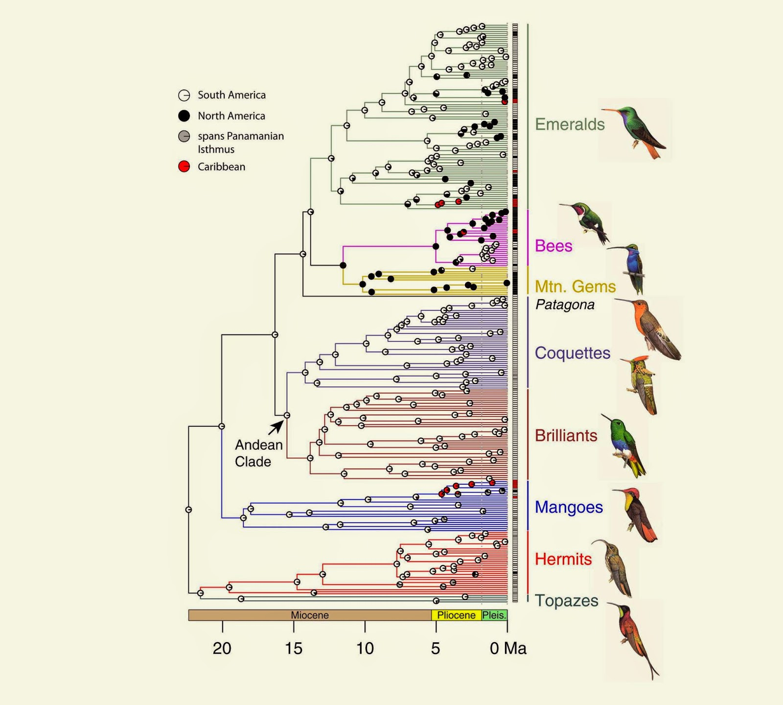 Species New to Science: [Ornithology • 2014] Molecular