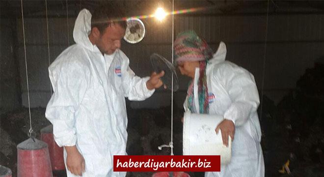 Diyarbakır Hani'de kadın çiftçinin başarısı