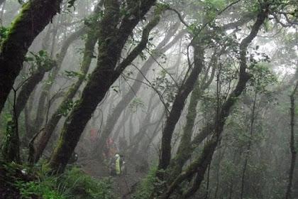 Kisah Mistis Gunung Gede yang Dialami Pendaki Viral di Medsos