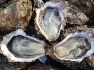 Les bienfaits des huîtres pour notre santé