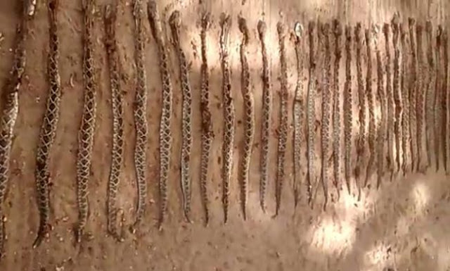 Itambeagora-destaque-207-650x391