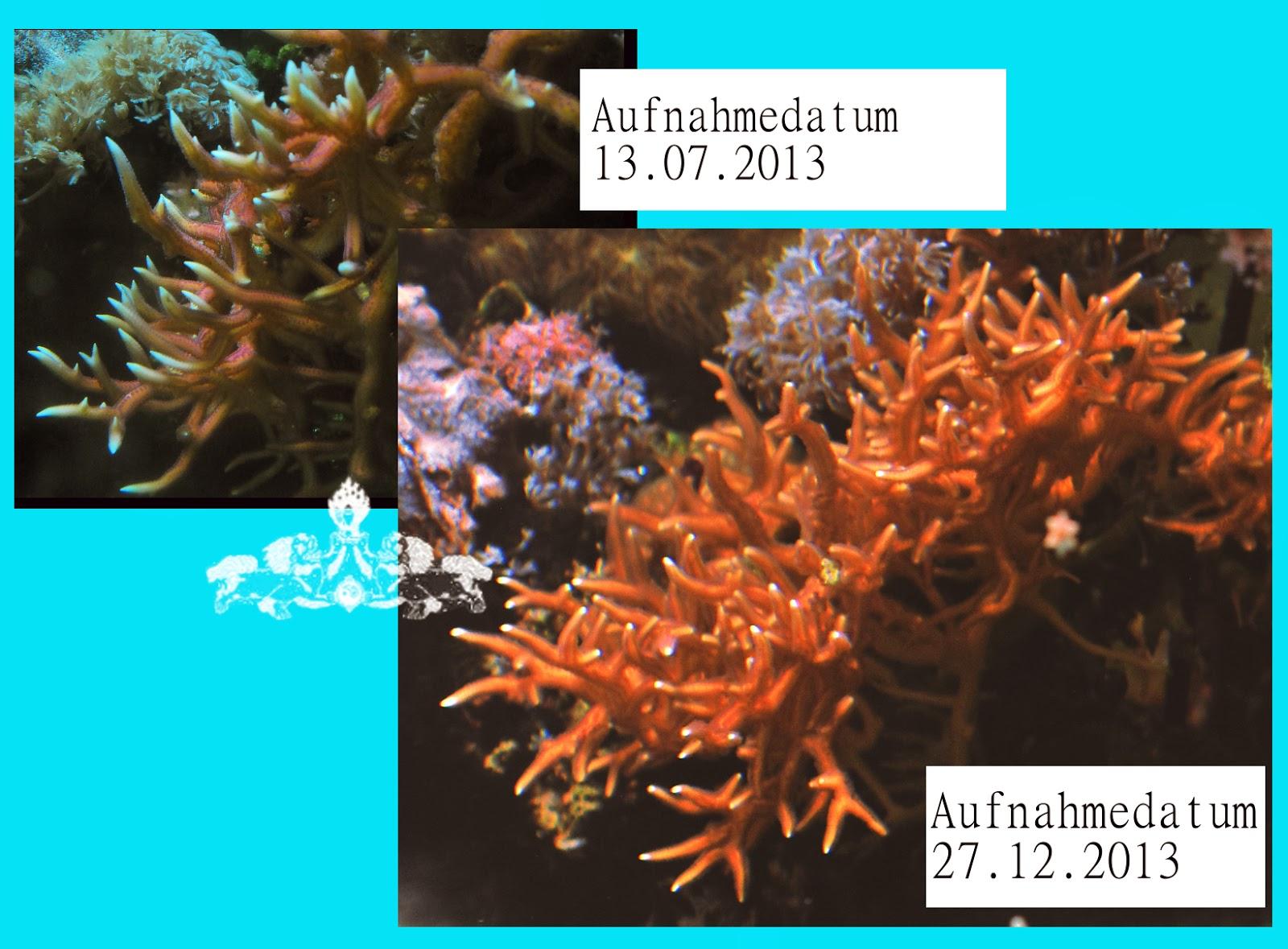dr pilz reef tank chemistry wie schnell wachsen korallen sps. Black Bedroom Furniture Sets. Home Design Ideas