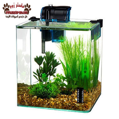 أهم أنواع وفوائد النباتات المائية فى حوض السمك بالصور