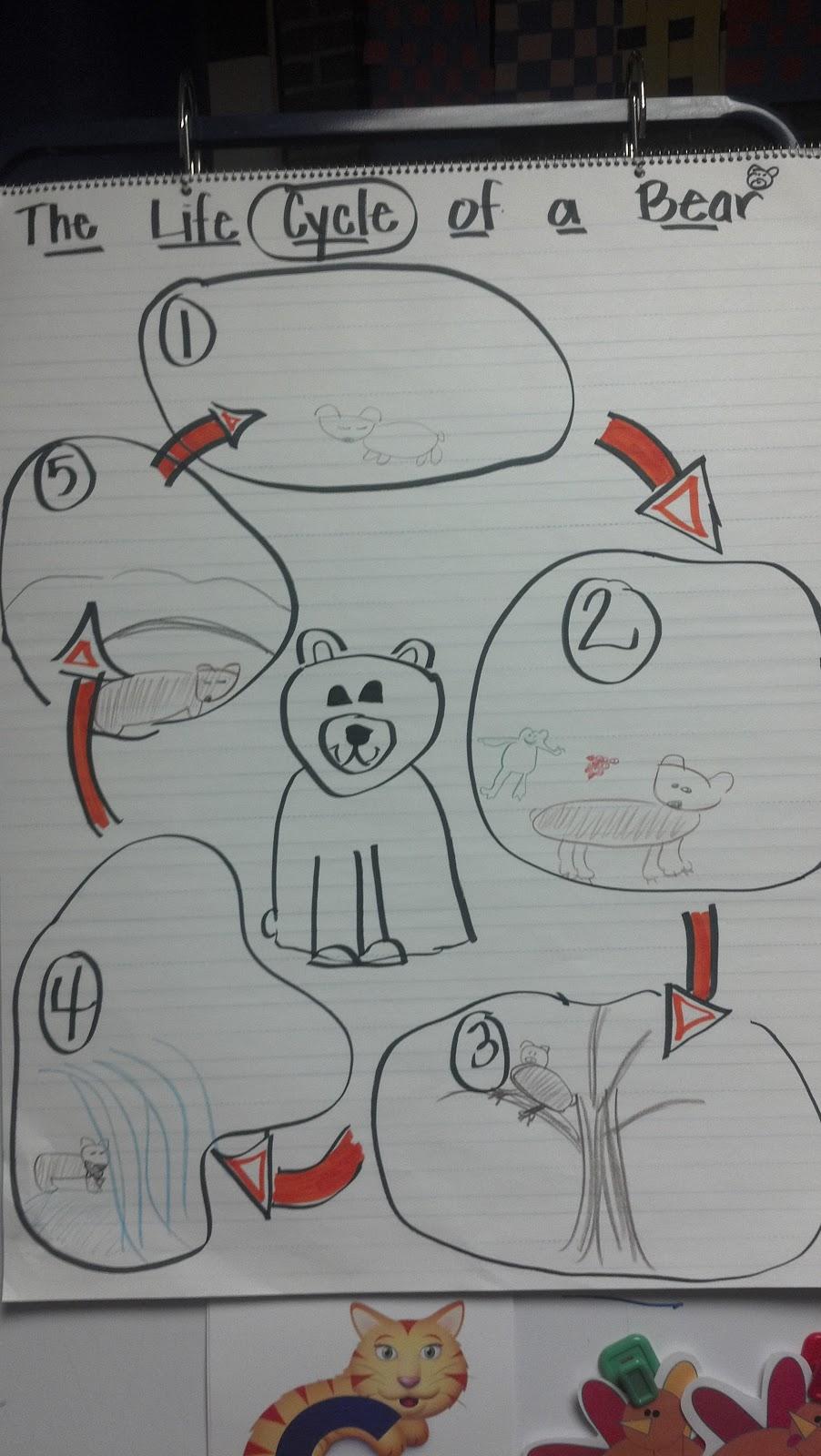 search results for u201cpolar bears worksheet u201d calendar 2015 04 660 grizzly wiring diagram 2002 yamaha [ 902 x 1600 Pixel ]