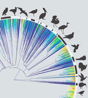 The new birds family tree