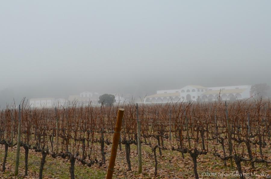Dehesa del Carrizal デエサ·デ·カリサル ラマンチャのパゴワインのワイナリー