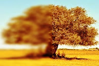 Olive Tree and the Fig Tree short story for kids,